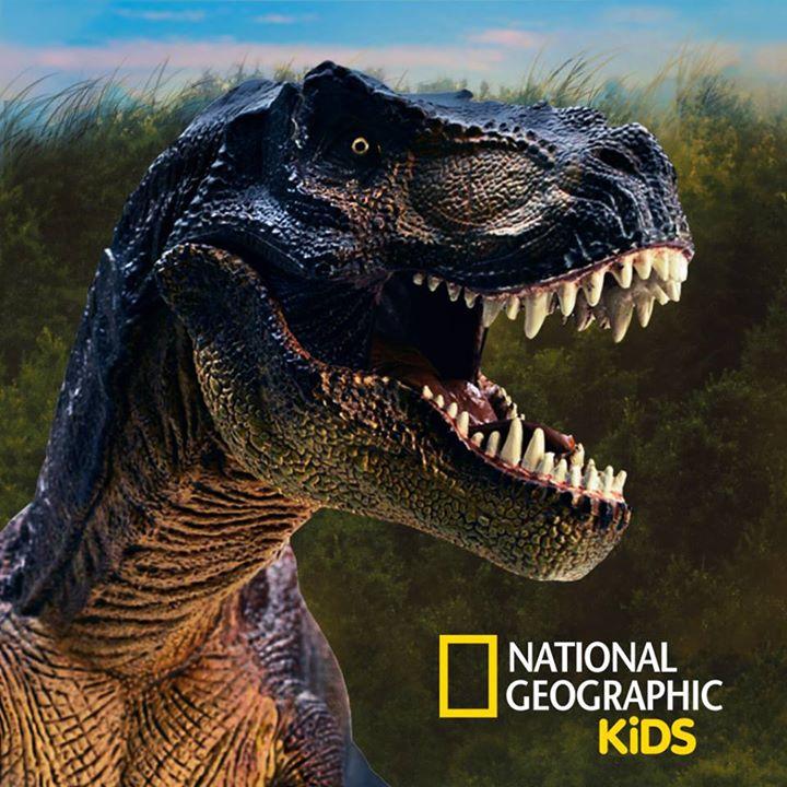 National Geographic Kids UK Bot for Facebook Messenger
