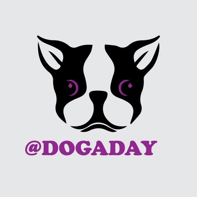 Dog A Day Bot for Kik