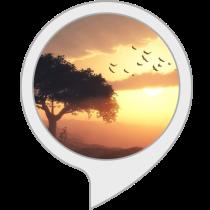 Relaxing Sounds: Bamboo Flute Bot for Amazon Alexa