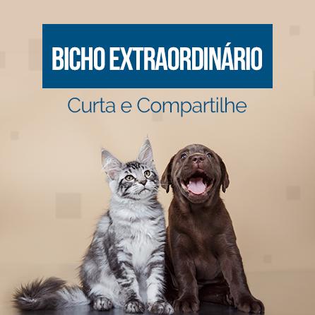 Bicho Extraordinário Bot for Facebook Messenger