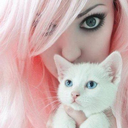 Gatos domésticos Bot for Facebook Messenger